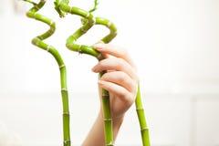 красивая рука женщин держа бамбуки Стоковые Фотографии RF
