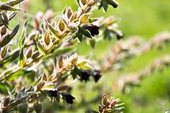 Красивая свежая солнечная естественная предпосылка с яркими ыми-зелен лист подсвеченными по солнцу на зеленом цвете стоковые фотографии rf