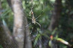 Красивая сеть с черным пауком стоковое изображение