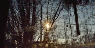 Красивая сельская Фландрия, затопленный луг стоковая фотография rf