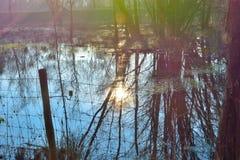 Красивая сельская Фландрия, затопленный луг стоковое изображение