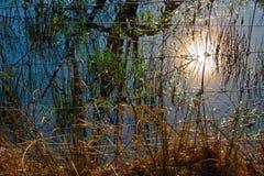 Красивая сельская Фландрия, затопленный луг стоковое фото