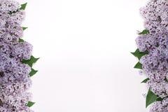 Красивая сирень цветет с листьями с обеих сторон экрана Стоковые Изображения RF