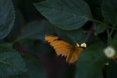 Красивая сломанная бабочка подогнала стоковое изображение rf