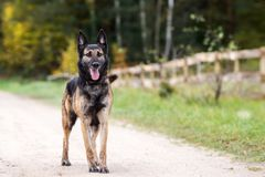 Красивая смешанная собака породы представляя outdoors стоковое фото rf