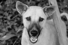 Красивая собака глаз в черно-белой теме Стоковая Фотография RF
