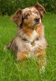 Красивая собака с любознательным выражением Стоковое фото RF