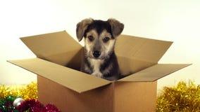Красивая собака щенка сидит в коробке почтового сбора с украшениями рождества и Нового Года Стоковая Фотография RF