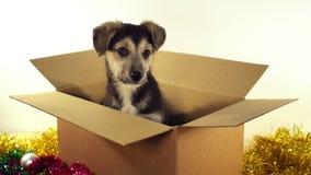 Красивая собака щенка сидит в коробке почтового сбора с украшениями рождества и Нового Года Стоковое Изображение