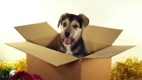 Красивая собака щенка сидит в коробке почтового сбора с украшениями рождества и Нового Года Стоковые Фото