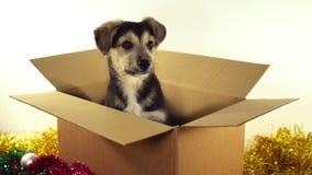Красивая собака щенка сидит в коробке почтового сбора с украшениями рождества и Нового Года Стоковые Изображения