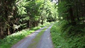 Красивая солнечная дорога леса захваченная на kickstooter, точке зрения, тележках камеры вперед, POV акции видеоматериалы