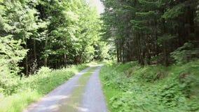 Красивая солнечная дорога леса, kickstooter, точка зрения, тележки камеры вперед, POV видеоматериал