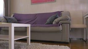 Красивая софа в живущей комнате сток-видео