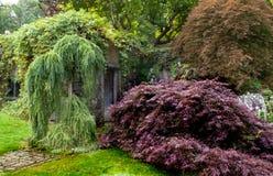 Красивая сочная листва японского клена и плача вербы Стоковое Фото