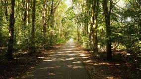 Красивая солнечная дорога леса стоковое изображение