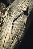 Красивая старая выдержанная древесина Стоковые Изображения RF