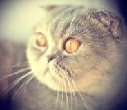 Красивая створка scottish Стоковое Изображение