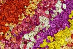 Красивая стена сделанная красочных роз Стоковое Изображение RF