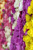 Красивая стена сделанная красочных роз Стоковая Фотография RF
