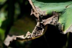 Красивая сухая лилия пусковой площадки или воды лотоса и пусковая площадка лилии Стоковое Фото