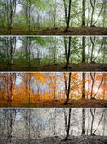 Красивая сцена в лесе, изменение утра 4 сезонов Стоковые Изображения