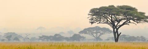 Красивая сцена национального парка Serengeti стоковое изображение