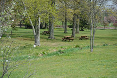 Красивая сцена парка Стоковые Изображения RF