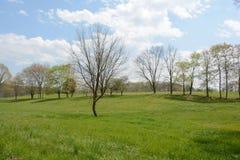 Красивая сцена поля Стоковые Изображения
