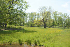 Красивая сцена поля Стоковые Фотографии RF