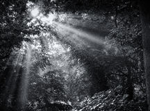 Красивая сцена утра Стоковые Фотографии RF