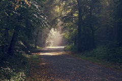 Красивая сцена утра Стоковые Фото