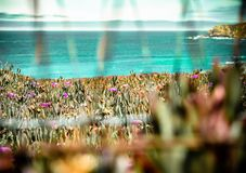 Красивая съемка ландшафта побережья Califonia стоковое фото rf