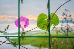 Красивая слава утра в заходе солнца Стоковые Фото