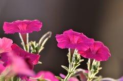 Красивая слава утра Стоковая Фотография