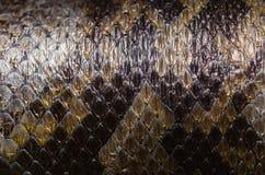 Красивая текстура кожи питона Стоковое Изображение