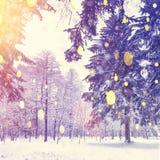 Красивая тема рождества Снежинки цвета на предпосылке леса зимы Снежности в восходе солнца зимы леса ярком Стоковое Фото