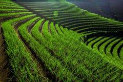 Красивая терраса Argapura Majalengka Стоковое Изображение