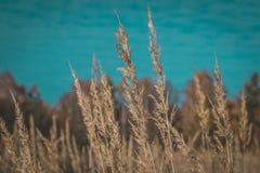 Красивая трава в поле стоковая фотография rf