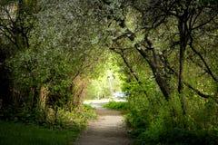 Красивая дуга цветка над тропой на саде весны Стоковая Фотография