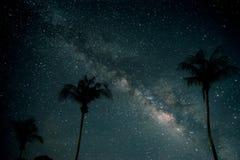 Красивая фантазия пальмы на тропическом пляже с млечным путем играет главные роли в предпосылке ночных небес стоковые фотографии rf