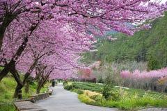 Красивая ферма Тайвань Wuling Стоковые Изображения RF