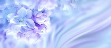 Красивая фиолетовая сирень цветет предпосылка ветви цветения Шаблон карточки подарка приветствию тонизированное изображение абстр стоковые фотографии rf