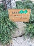 Красивая фотография ландшафта камень carvings восхитительный Деревянный высекать стоковое изображение rf