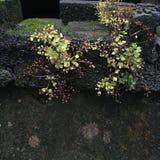 Красивая фотография ландшафта камень carvings восхитительный Деревянный высекать стоковая фотография rf