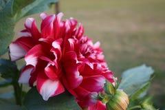 Красивая фотография цветков деревни стоковые изображения