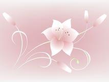 Красивая флористическая предпосылка с лилией цветка Стоковые Изображения RF