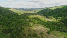 Красивая холмистая долина с сериями деревьев Оно обильно загорено по солнцу сток-видео