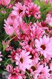 Красивая хризантема искусственных цветков Стоковые Фотографии RF