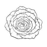 Красивая черно-белая роза изолированная на предпосылке конструируйте поздравительную открытку и приглашение свадьбы, день рождени Стоковые Изображения